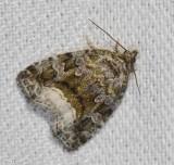 Large Mossy Glyph (Protodeltote muscosula), #9047