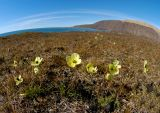 Wide view of tundra flowers