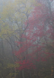 Dense Fog With Colors