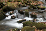 A Mountain Creek-Roaring Fork Motor Nature Trail