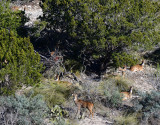 Axis deer from one of the many trails