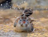 Splish splash I was takin a bath...
