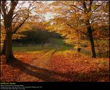 Fall colors in  Folehaven, Nysted, Denmark