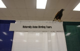 Harris's Hawk on top of my booth :)