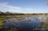 Wetland at Santa Ana NWR