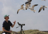 Curt feeding the Laughing Gulls