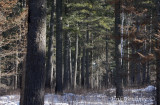 Superior National Forest Habitat