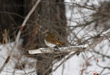 Spring Migration in Northern Minnesota 2013