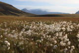W-2012-08-05 -0258- Islande - Photo Alain Trinckvel.jpg