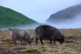 W-2012-08-05 -1621- Islande - Photo Alain Trinckvel.jpg