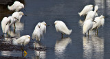 silver springs nature preserve, moro bay, california