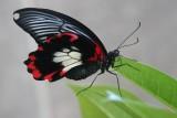 Cambridge Butterfly Conservatory, Ontario, Canada.