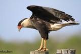 2013 Birds and Mammals