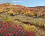 Arctic Barrens,Point Lake 5