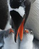 Antarctica-The Bottom of the World.