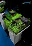 The Art of the Planted Aquarium 2013