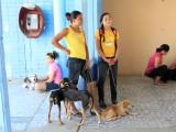 World Vets in San Juan del Sur (2013)