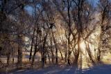 frosty morning IMG_0655.jpg