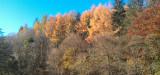 Autumn colours, Chatelherault CP, Hamilton