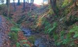 Autumn leaves, Chatelherault CP, Hamilton