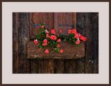 Carnations  (dry brush affect)