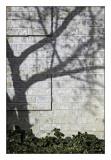 Shadows,  Fall