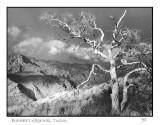 Blacketts Ridge trail