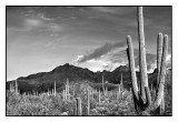Late afternoon,  Sabino Canyon