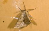 moth  9432.jpg