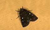 moth  9435.jpg
