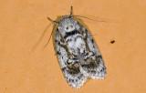 moth  9469.jpg