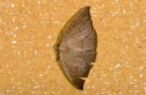 moth  9480.jpg