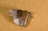 moth  9484.jpg