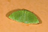 moth  9485.jpg