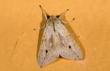 moth  n9489.jpg