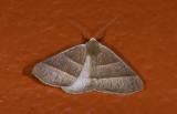 moth  g9502.jpg