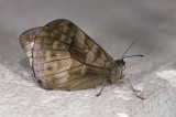 butterfly  9528.jpg