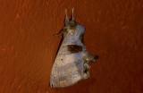 moth  s9535.jpg