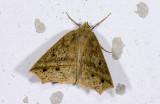 moth  g9559.jpg