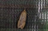 moth  s9563.jpg