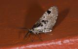moth  g9577.jpg