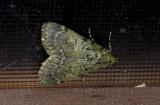 moth  g9583.jpg