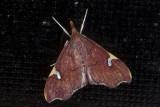 moth  n9584.jpg
