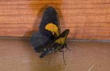 moth  g9588.jpg