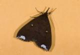 moth  n9589.jpg