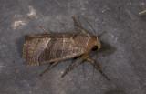 moth  9600.jpg