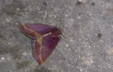 moth  9618.jpg