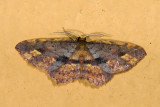 moth  9637.jpg