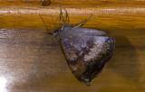 moth  9645.jpg