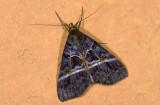 moth  9655.jpg